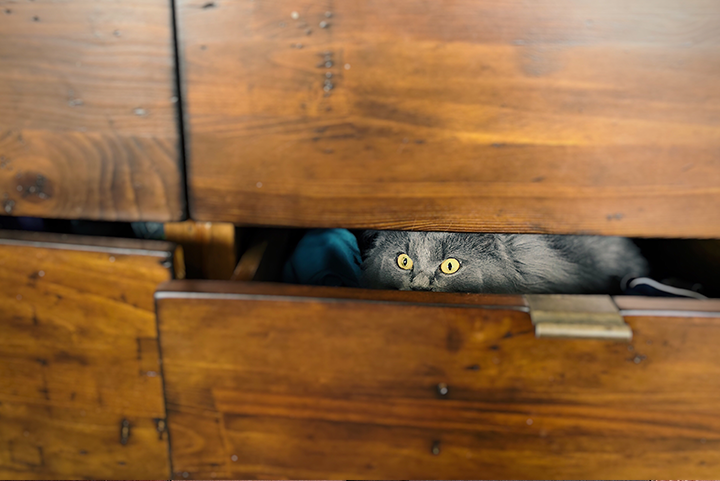 5 Effective Ways to Reduce Cat Travel Anxiety