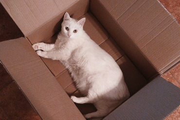 Moving House: How To Adapt Your Pet To The New Home