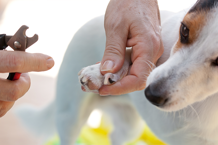 Pet Nails Clippers: Pros & Cons