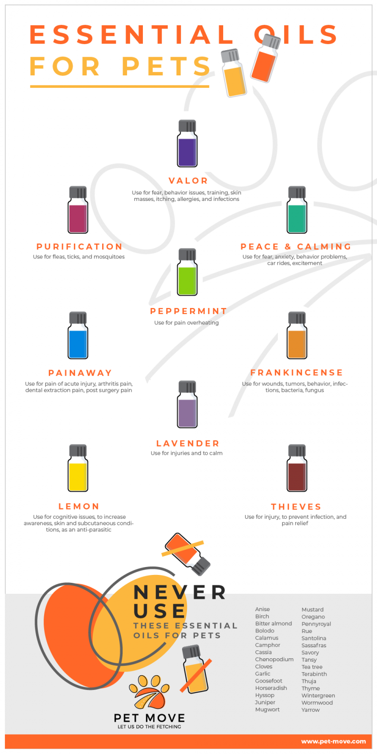 Infographic: Essential Oils For Pets